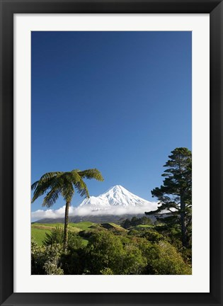 Framed Punga, Taranaki Mountain, North Island, New Zealand Print