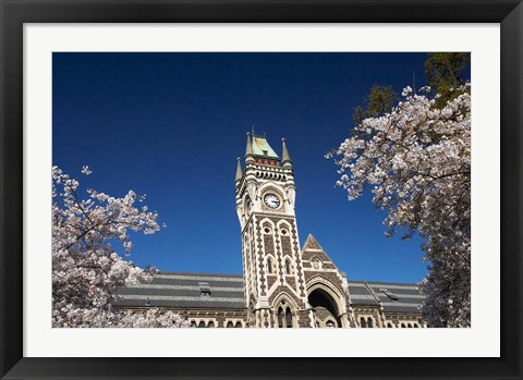 Framed Spring, Clock Tower, Dunedin, South Island, New Zealand (horizontal) Print