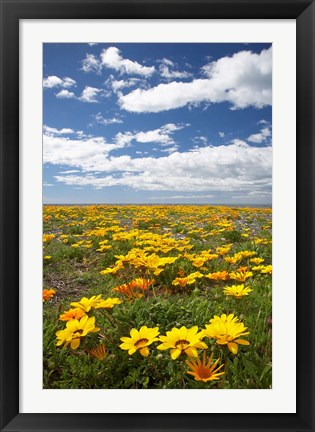 Framed Wildflowers, Marine Parade, Napier Waterfront, Hawkes Bay, North Island, New Zealand Print