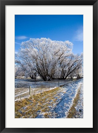Framed Hoar Frost, Oturehua, South Island, New Zealand Print