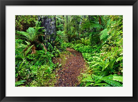 Framed New Zealand, Otago, Old Coach Walking Path, Forest Print