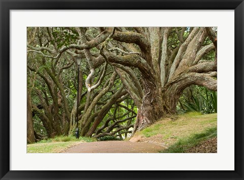 Framed Trees, Central Park, Auckland, New Zealand Print