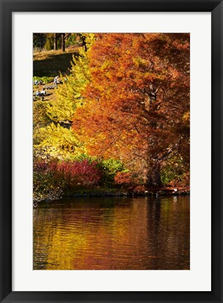 Framed Autumn colour in pond, Botanic Gardens, Dunedin, Otago, South Island, New Zealand Print