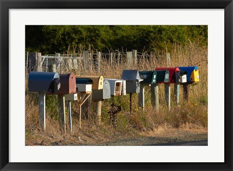 Framed Rural Letterboxes, Otago Peninsula, Dunedin, South Island, New Zealand Print