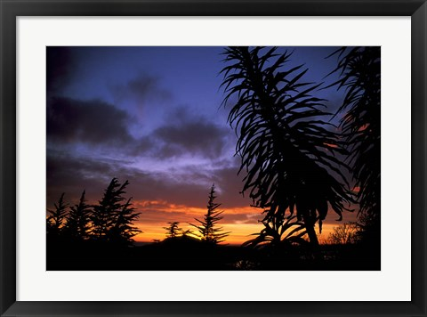 Framed Dunedin, South Island, New Zealand, Trees and sunset Print