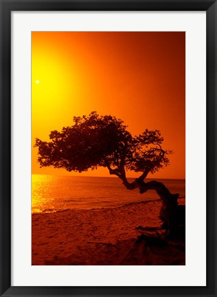 Framed Lone Divi Divi Tree at Sunset, Aruba Print
