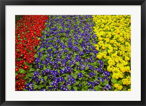 Framed Flower garden at Dunedin Railway Station, South Island, New Zealand Print