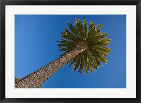 Framed Palm tree, Seymour Square, Marlborough, New Zealand Print