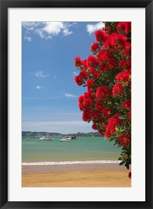 Framed Pohutukawa tree, beach, Paihia, North Island, New Zealand Print
