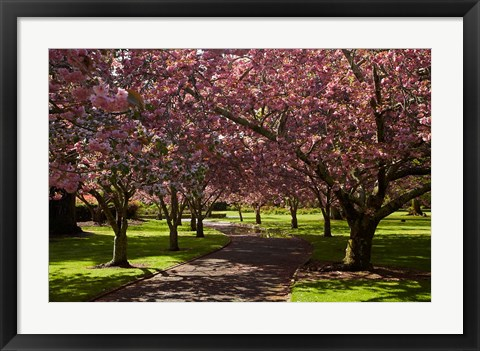 Framed Spring, Ashburton Domain, Mid-Canterbury, New Zealand Print