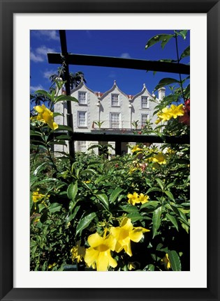 Framed Yellow flowers, St Nicholas Abbey, St Peter Parish, Barbados, Caribbean Print