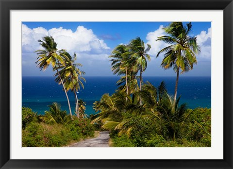 Framed Palm trees, Barbados at Bathsheba Print