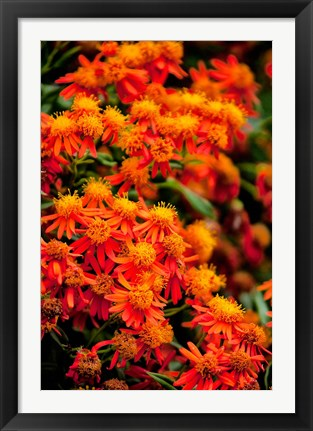 Framed Flora along the Beach at Spanish Wells in the Bahamas Print