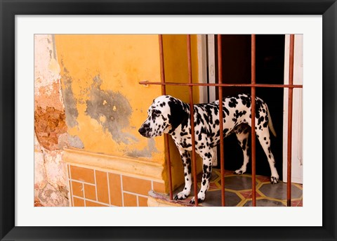 Framed Spotted dog and colorful wall in Trinidad Cuba Print