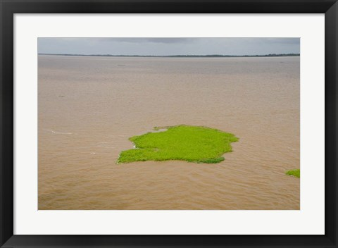 Framed Brazil, Amazon, Manaus The Meeting of the Waters Floating plant mat Print