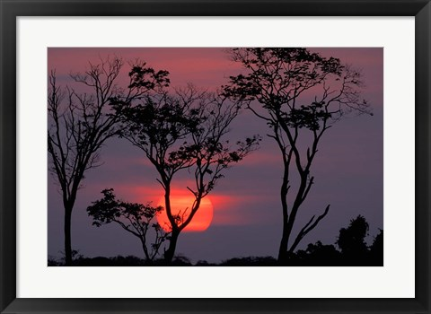 Framed Amazonia Sunset Print