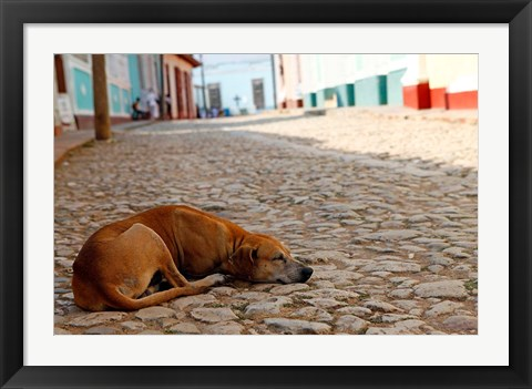 Framed Cuba, Trinidad Dog sleeping in the street Print