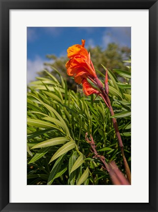 Framed Dominican Republic, Punta Cana, Flower Print
