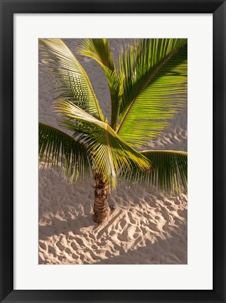 Framed Palm tree, Bavaro Beach, Higuey, Punta Cana, Dominican Republic Print