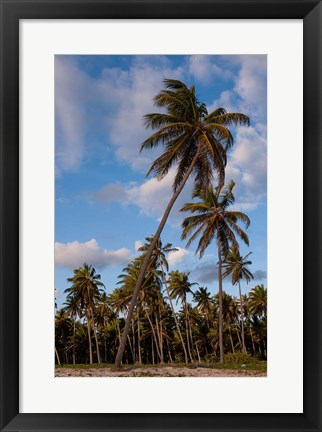 Framed Palm Trees, Bavaro, Higuey, Punta Cana, Dominican Republic Print