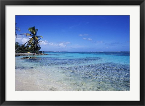 Framed Beach and Palms in Sainte Anne, Guadeloupe Print