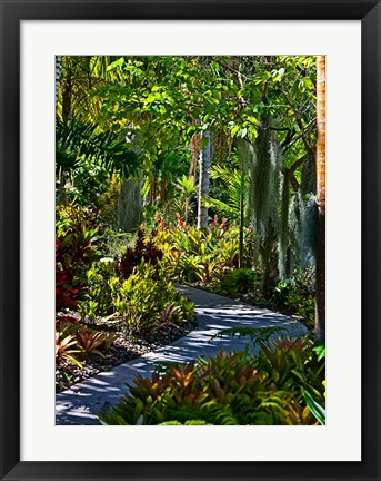Framed Nature Trail in Charlestown on Nevis, West Indies Print