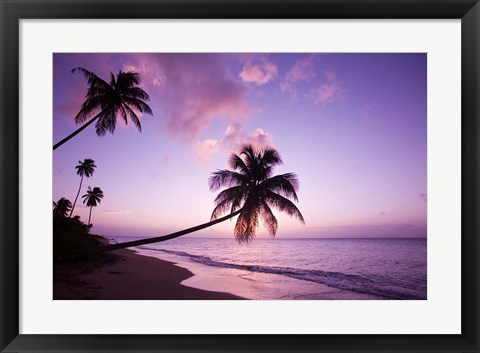 Framed Palm Trees at Sunset, Coconut Grove Beach at Cade's Bay, Nevis, Caribbean Print