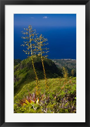 Framed Martinique, West Indies, Agave on Ridge, Mt Pelee Print