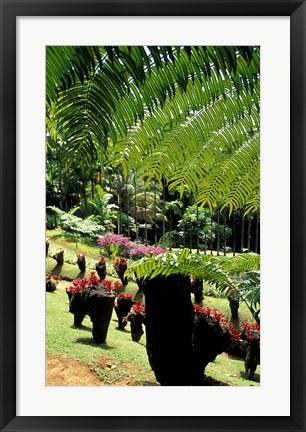 Framed Tropical Plants at the Pitons du Carbet, Martinique, Caribbean Print