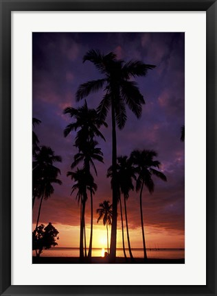 Framed Palm Trees at Sunset, Puerto Rico Print