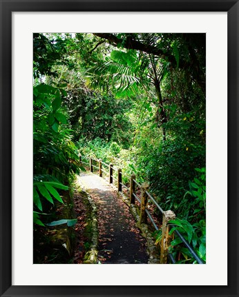 Framed Puerto Rico, Luquillo, El Yunque National Forest path Print