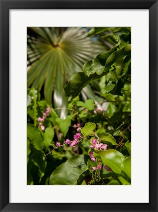 Framed Tropical flowers and palm tree, Grand Cayman, Cayman Islands, British West Indies Print