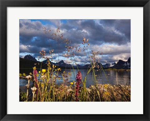 Framed Wildflowers, Jasper National Park, Alberta, Canada Print