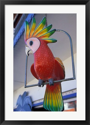 Framed Painted Tropical Bird, St Martin, Caribbean Print