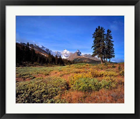Framed Landscape with Mt Saskatchewan, Banff NP, Alberta Print