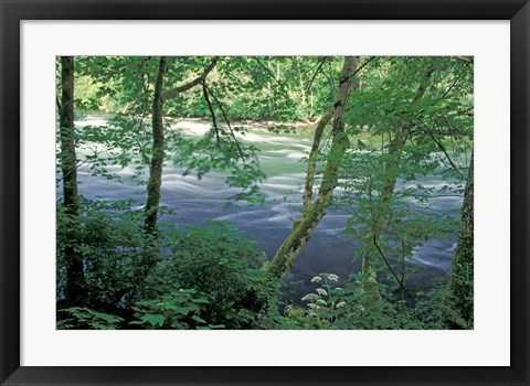 Framed Trees and Ferns on Banks of Campbell River, Vancouver Island, British Columbia Print