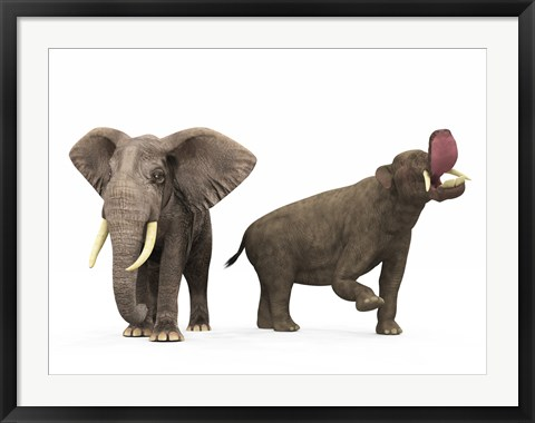 Framed adult Platybelodon compared to a modern adult African Elephant Print