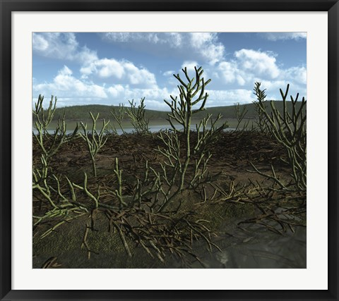 Framed Prehistoric landscape of Silu-Devonian land plants with branching axes Print