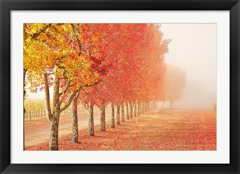 Framed Fall Trees in the Mist Print