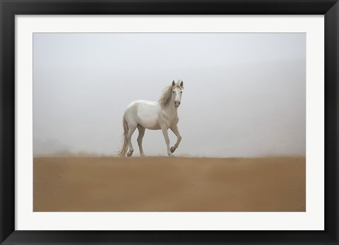 Framed White Stallion Print