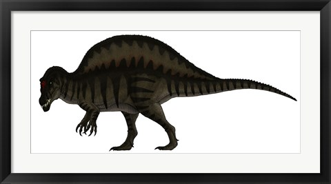 Framed Spinosaurus, a Large Carnivore of the Cretaceous Period Print
