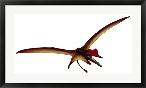 Framed Darwinopterus, a Pterosaur from the Jurassic Period Print