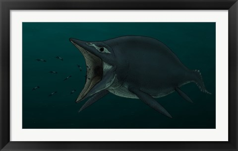 Framed Concept of the Suction Feeding Shastasaurus Eating Celphalopods Print
