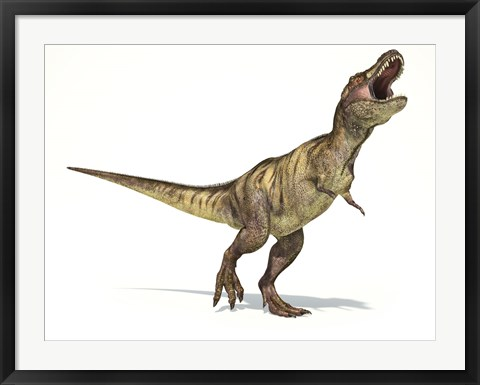 Framed Tyrannosaurus Rex Dinosaur on White Background Print