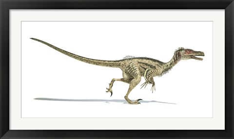 Framed Velociraptor Dinosaur on White Background Print