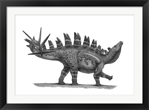 Framed Pencil Drawing of Chungkingosaurus Jiangbeiensis Print