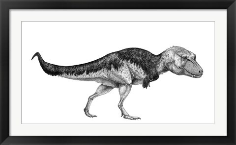 Framed Black Ink Drawing of Lythronax Argestes Print