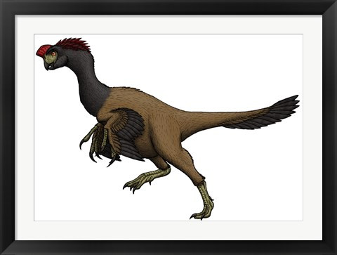 Framed Citipati, an Oviraptorid from the Cretaceous Period Print