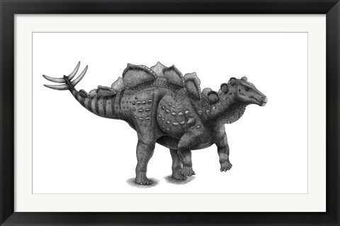 Framed Pencil Drawing of Wuerhosaurus Homheni Standing on its Hind Legs Print