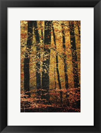 Framed Wind in the Trees Print